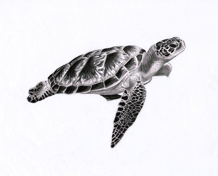 Sea Turtle Tattoo Black And White