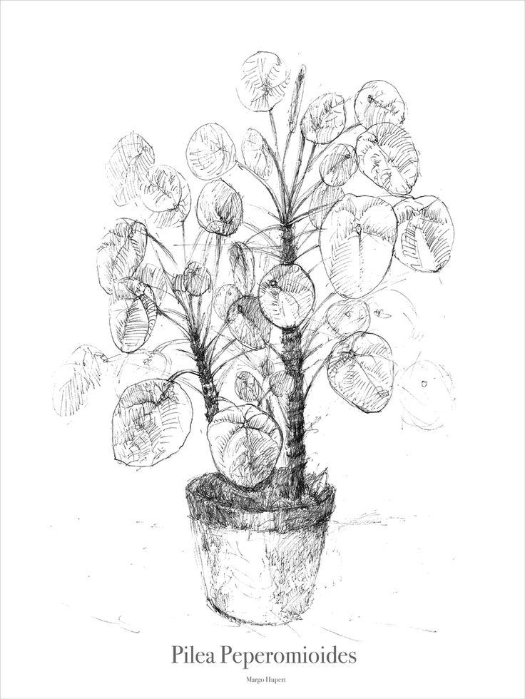 Pilea sketch, print margohupert.pl