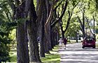 Bellefontaine, Ohio | Tree City USA since 1980 | The Arbor Day Foundation