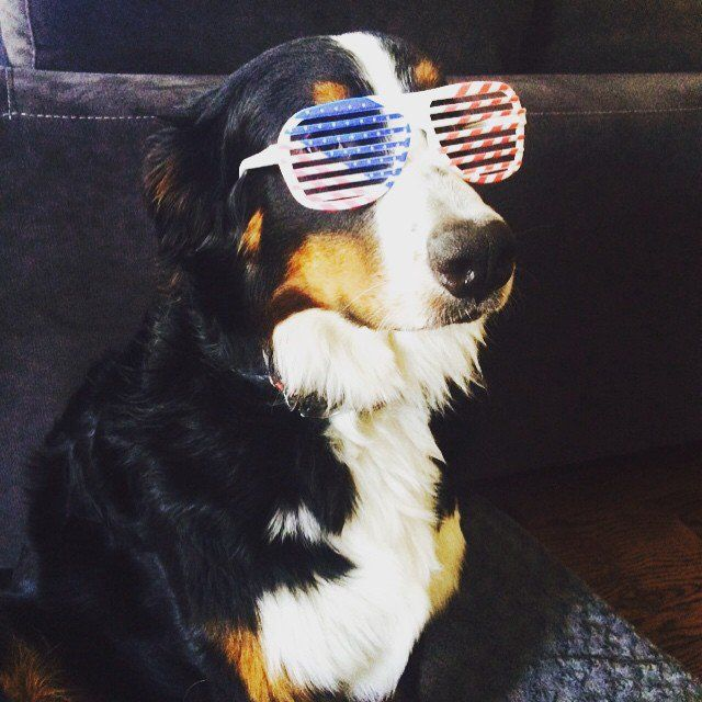 Pin for Later: 20 Pups That Are Proud to Be American
