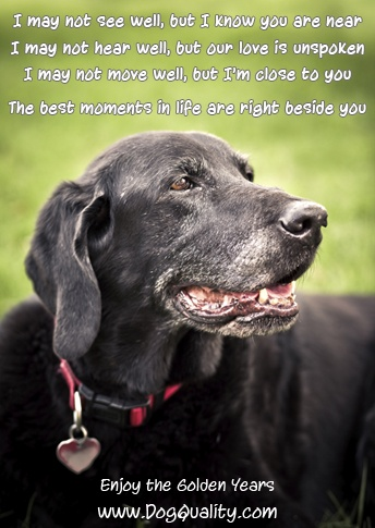 Treasure every moment with your older dog... do not put them to sleep just because the got old and a bit crazy; they wouldn't do it to you; a dog would care for you, even in your worst senior moments.