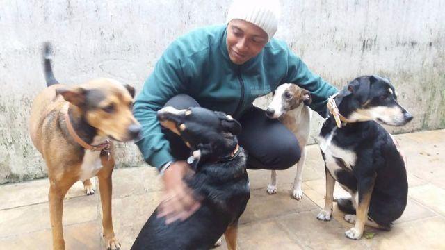 Yorkshire Terrier - A segunda casa de seu cão em São Paulo