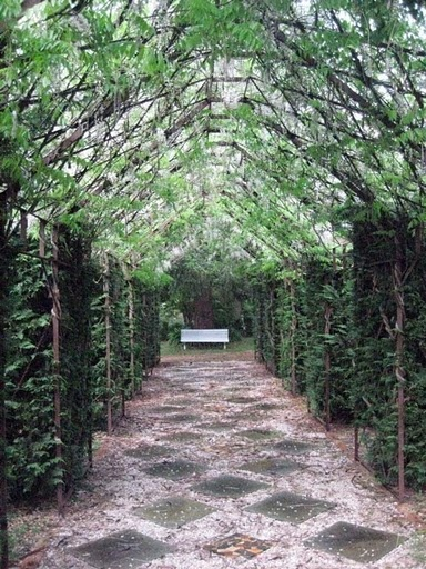 The wisteria walk in Tasma Gardens, Daylesford, Victoria, Australia.