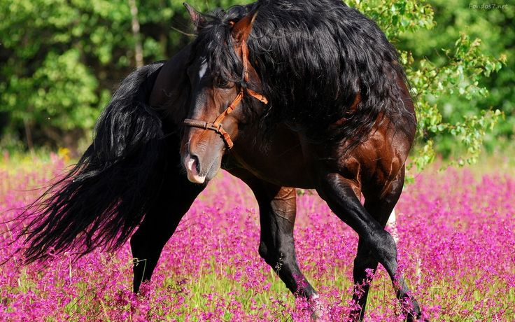 long haired black cats in a feild of flowers - Bing Images