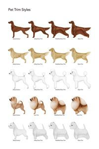 dog grooming charts - Google Search                                                                                                                                                                                 More