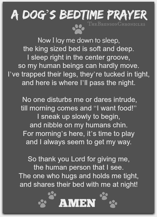 A dog's bedtime prayer I miss my deeply beloved dog, Baby, sooooo much!!