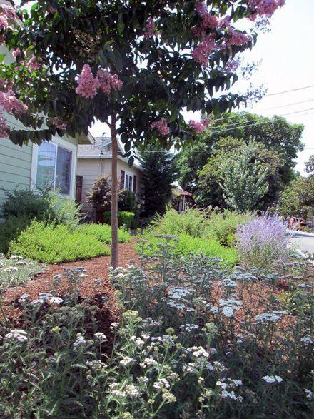 images drought tolerant landscape low water drought tolerant garden landscape design in sunnyvale