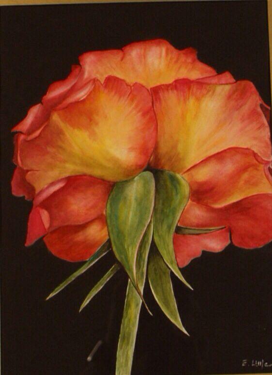 Melba's Rose, Watercolour by Elizabeth Little