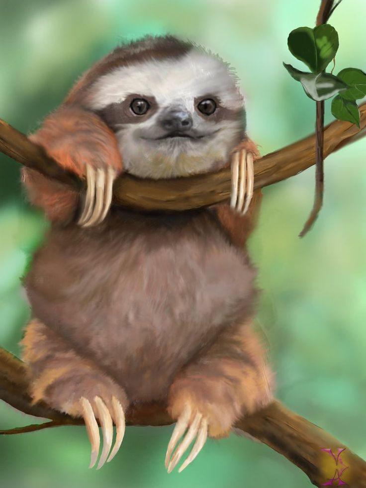 Baby Sloth Bath Gif