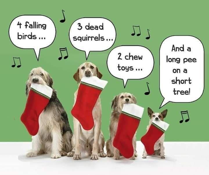 Pin By Philippa Tye On Christmas Memes Christmas Dogs Funny Dog Jokes Christmas Memes