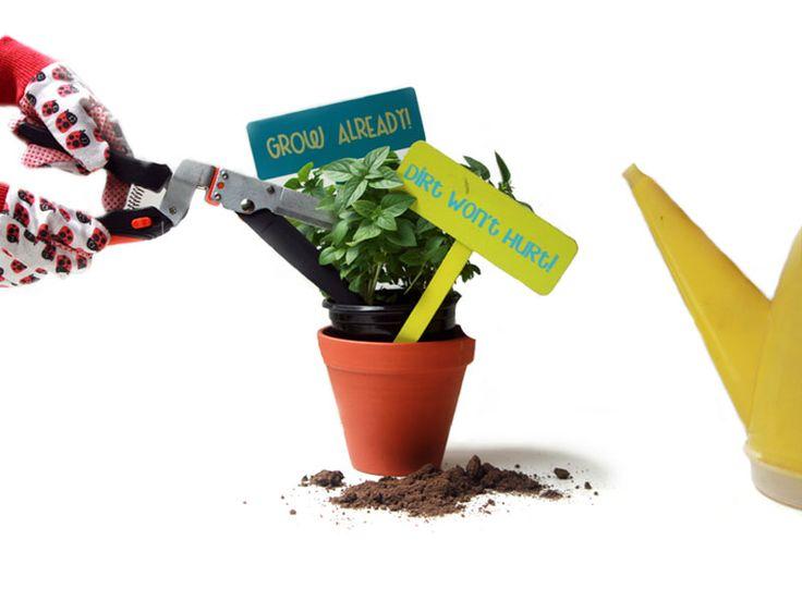 How to Keep a Plant Alive... #diy #plants #decor
