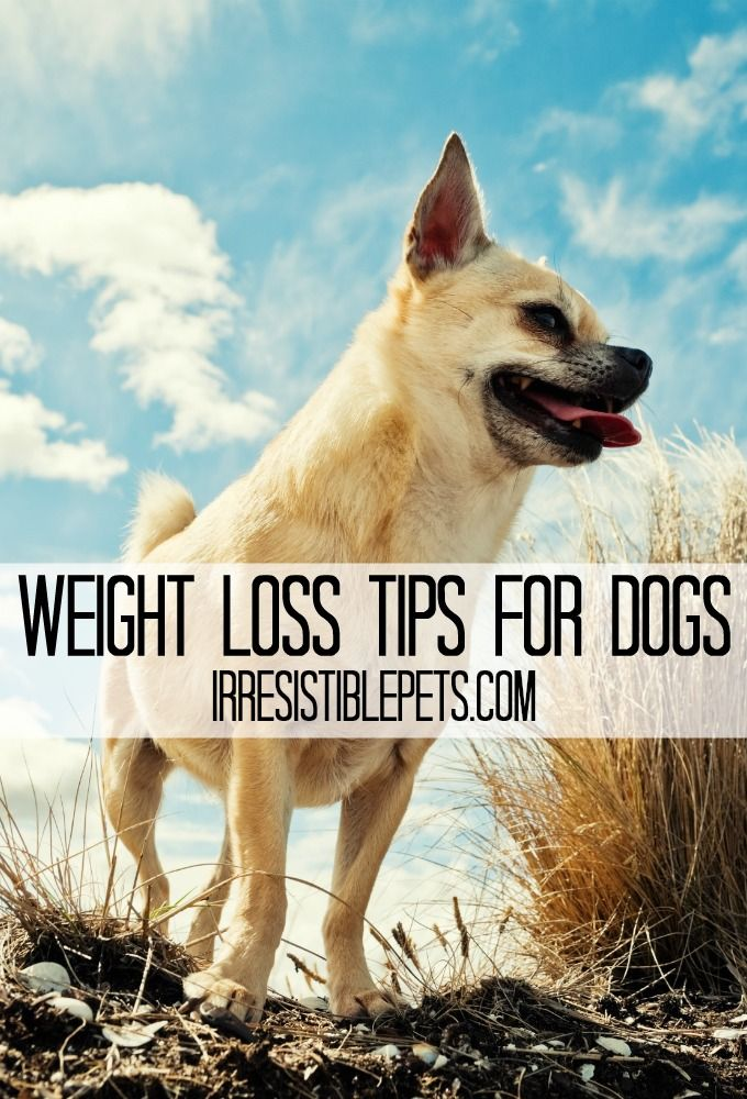 Dog Weight Loss Tips and Resources for the New Year.