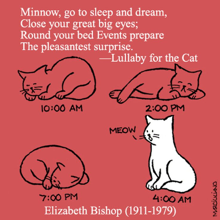 Poems about cats on pinterest rainbow bridge poem poem and pet loss