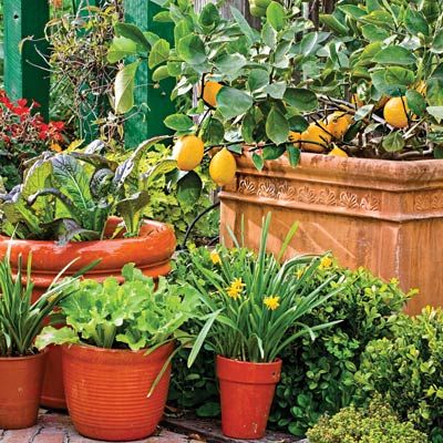 Grow veggies and fruits in containers