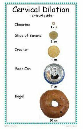 Cervical dilation food chart (lol)