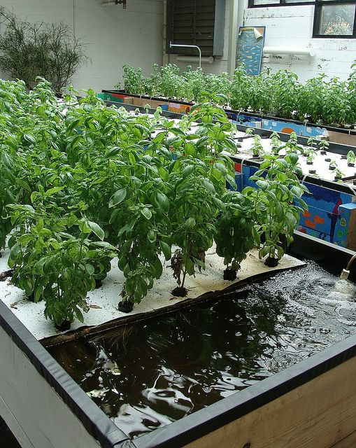 Aquaponics system; could be installed in a greenhouse for year-round source of veggies, herbs, and fish.