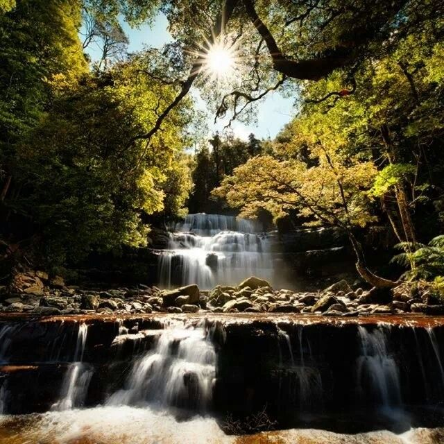 Liffey Falls, Tasmania. #liffeyfalls #tasmania #waterfalls