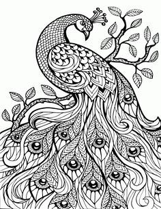 Free Printable Coloring Book Pages Best Adult Books Abstract Paisley