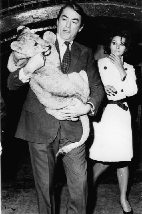 Gregory Peck and Sophia Loren and a baby lion in 1965. No big deal.