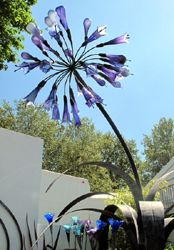 Agapanthus bottle tree