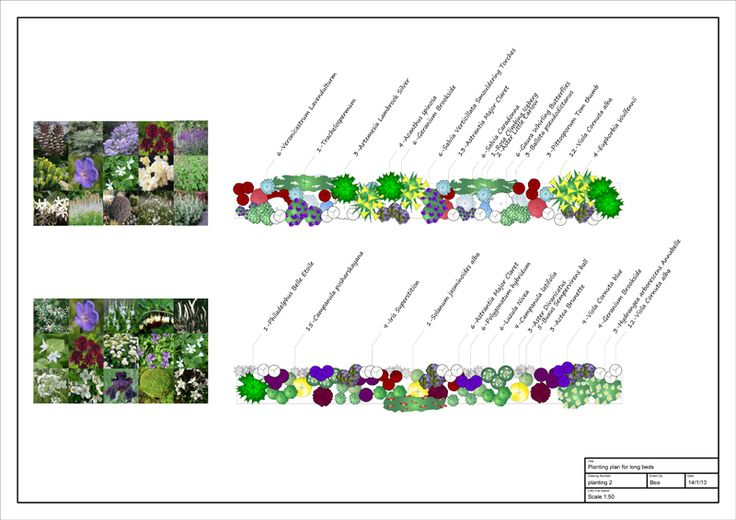 17 best images about sketches on pinterest gardens for Herbaceous border design examples
