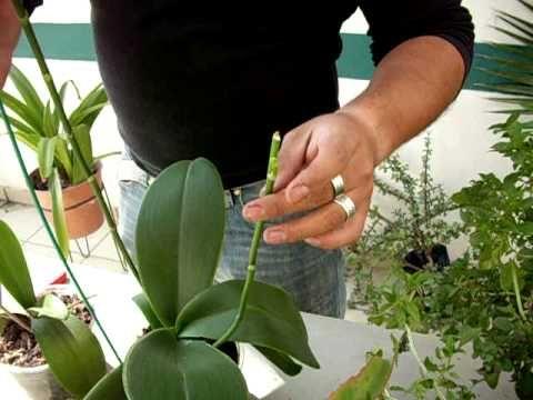 """Realizado en el Vivero San Isidro en el D.F. si te interesa conocer más sobre el cultivo de """"Orquídeas Hidropónicas"""" y tradicionales, tenemos un #curso donde..."""