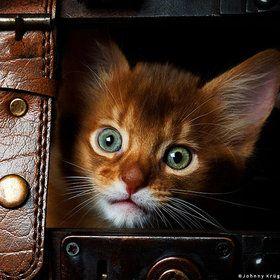hidding!