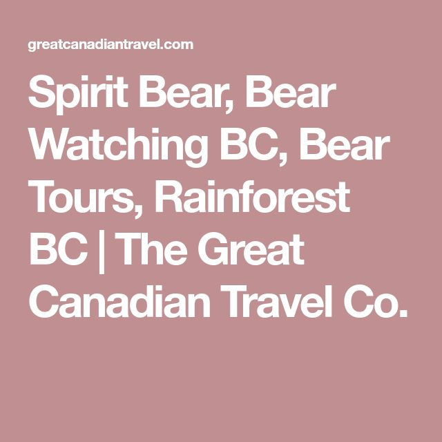 Spirit Bear, Bear Watching BC, Bear Tours, Rainforest BC | The Great Canadian Travel Co.