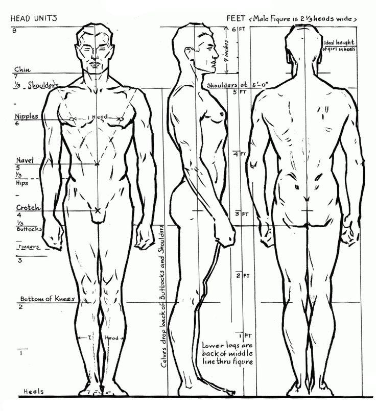 104 best Cursos de Desenho - Anatomia Humana images on Pinterest ...