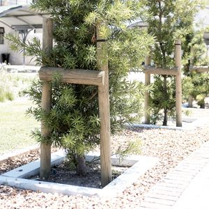 25 best ideas about high desert landscaping on pinterest for Hearty plants for outdoors