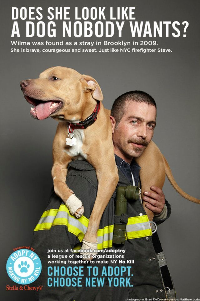 Terrific New York City campaign for pet adoption. Tugs your heart but is inspiring, not depressing.