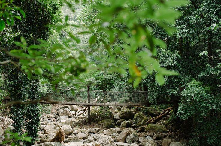 Suspension Bridge , Rainforest South Coast NSW