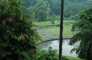 Bogor Botanical Gardens. Only 60km away! Why haven't I been here? 3 day weekend=perfect!