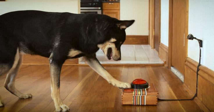Votre chien vous enverra bientôt ses propres selfies !