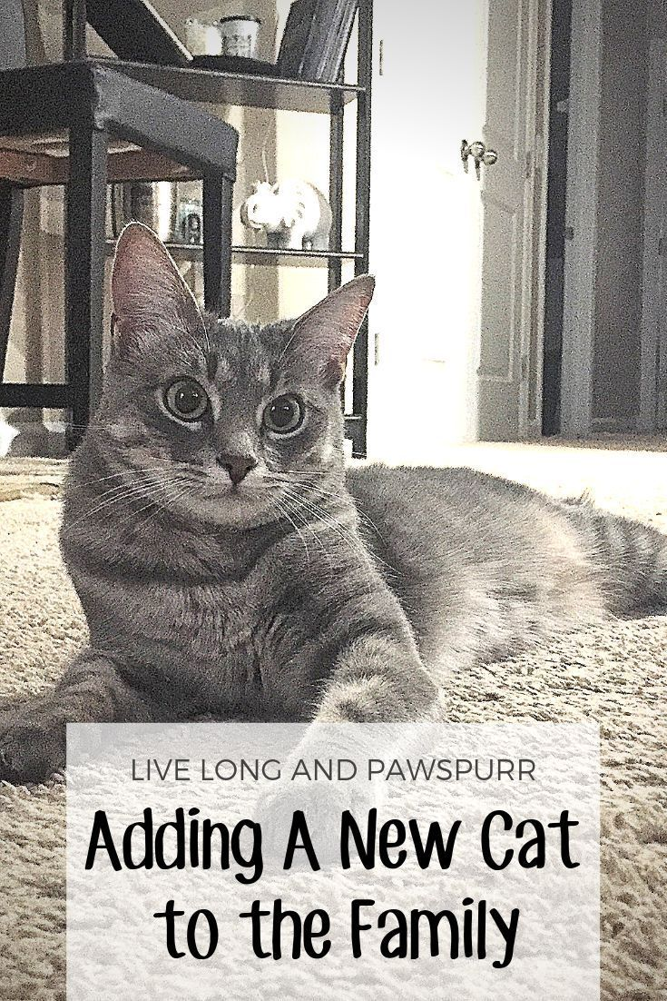 Adding A New Cat To The Family Live Long And Pawspurr Cat Training Cats Cat Facts
