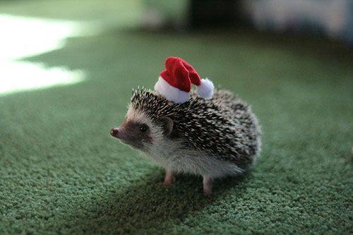 Santa Hedgehog 2!