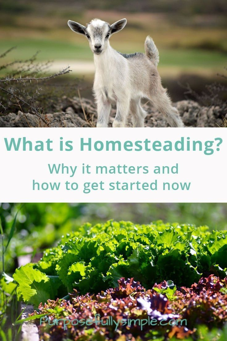 best 25 what is homestead ideas on pinterest raising chickens
