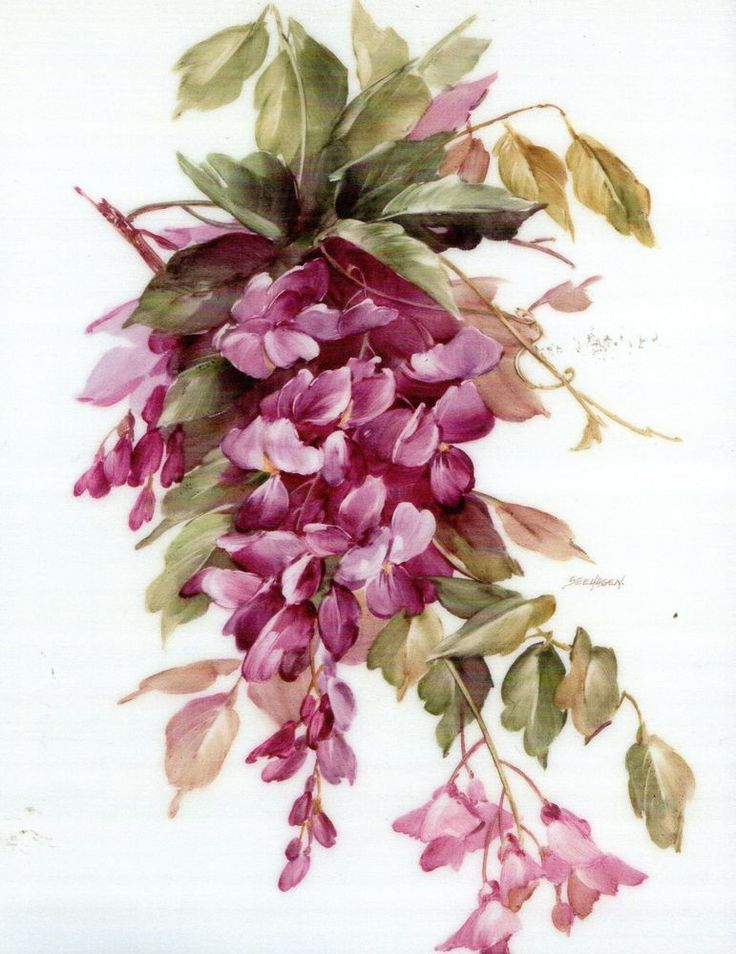 Wisteria China Painting Study by Mary Ashcroft Seehagen