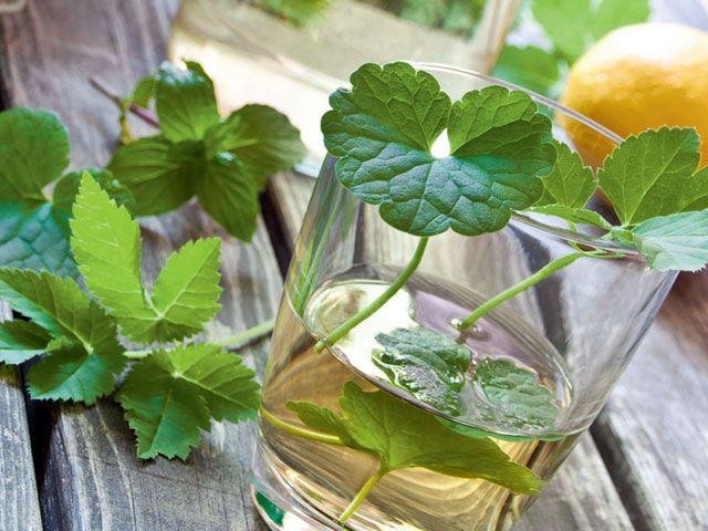 Gundermann-Giersch Kräuter-Drink - GartenFlora Rezepte - Garten-Infos - gartenflora.de