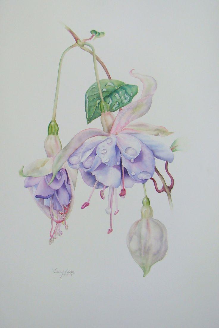 'Blue Smoke' Fuchsia watercolor available direct art@jennycoker.com