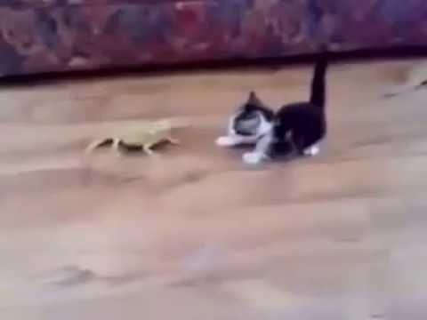 TRY NOT TO LAUGH (HARDEST VERSION) - Funniest CAT & DOG Compilation 16 D...