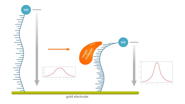 Aptamer-based electrochemical biosensors using Methylene Blue as a redox reporter