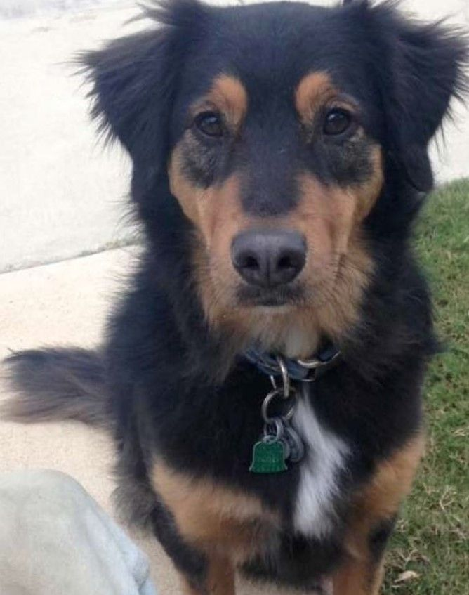 Pin By Vadym Orlov On Dog Mixes Dog Mixes Golden Retriever Mix