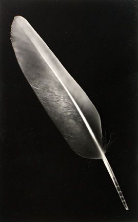 PHOTOGRAM - RAYOGRAPH (FEATHER), 1940's  Emmanuel (Man Ray) Radnitzky