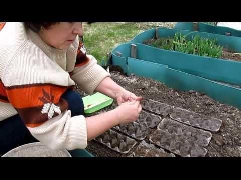 Посев моркови,, редиса, салата в ячейки от яиц. Прореживать не надо! - YouTube