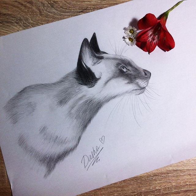 Cat sketch Instagram dayna.bar