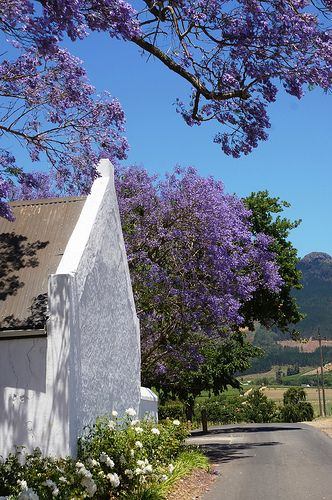 Oh for the love of wine! This wine farm in Stellenbosch, South Africa is stunning.