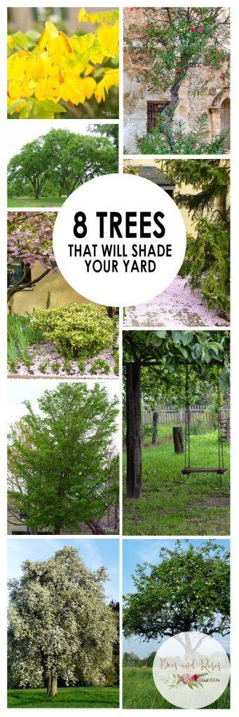 shade your yard shade trees trees how to grow shade trees shade