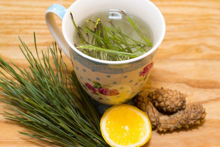 How to Make Pine Needle Tea -- via wikiHow.com