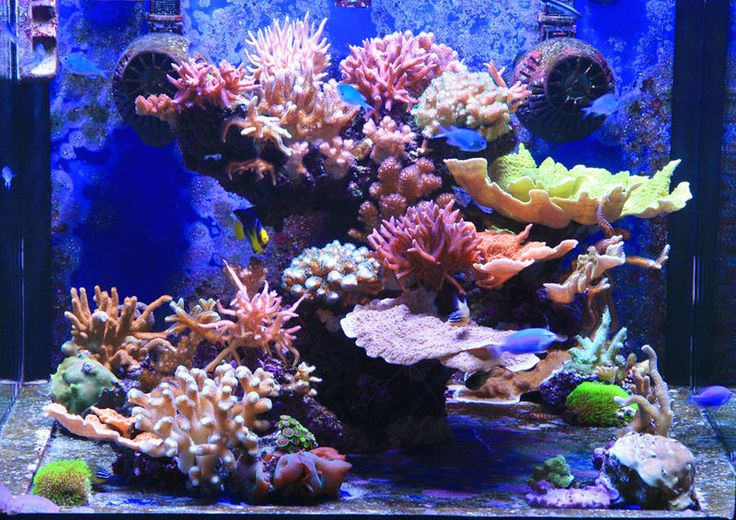 17 images about aquatic aspirations on pinterest for Aquarium recifal nano